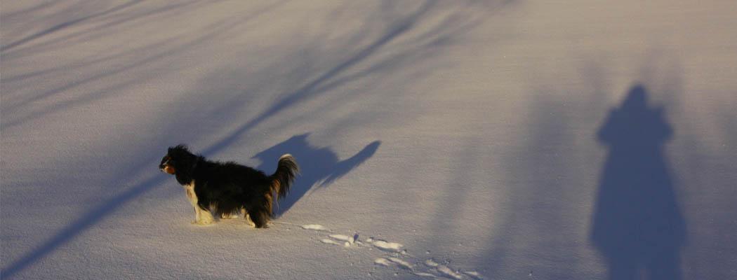 slideshow_winter_00